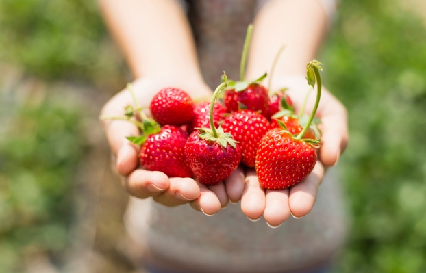 strawberry on woman hands